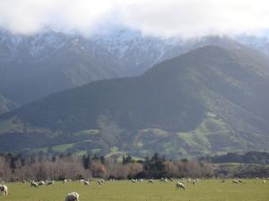 New Zealand 079